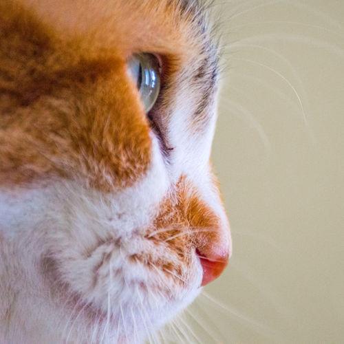 Pet Care Provider Dara Brewer Gallery Image 3