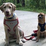 Skillful Pet Carer in Dunwoody