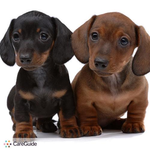 Pet Care Provider Abby Goertzen's Profile Picture
