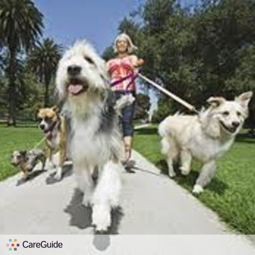 Dog Walker/Pet Sitter