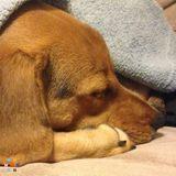 Dog Walker, Pet Sitter in Olyphant