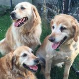 Mature, experienced dog lover available for dog walking/pet sitting. Excellent references!