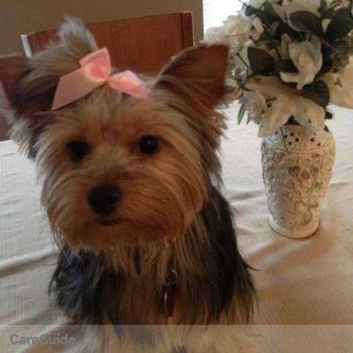 Pet Care Provider Alyssa McVaugh's Profile Picture