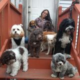 Experienced pet sitter couple looking to travel