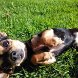 Passionate Dog Walker in Lakewood, California