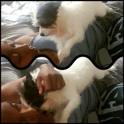Pet Care Provider Jene H Gallery Image 3