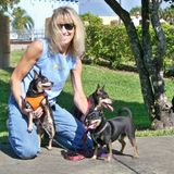 Seeking an in-house Dog Sitting Opportunity in Pompano Beach