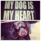 Dog Walker, Pet Sitter in Bowie