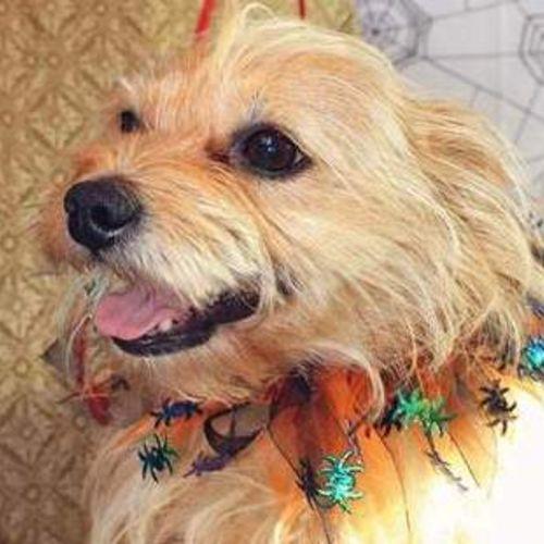Pet Care Provider Melissa Brittain Gallery Image 2