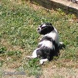 Dog Walker, Pet Sitter in Hempstead