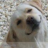 Dog Walker, Pet Sitter in Silver Spring
