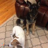 Dog Walker Job, Pet Sitter Job in Chico