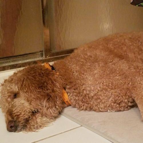 Pet Care Job Renee N Gallery Image 2