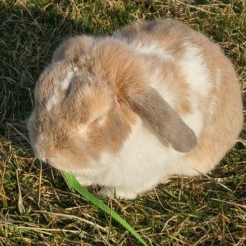 Pet Care Job Yvonne Craig's Profile Picture