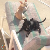 House Sitter/pet sitter
