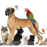 Expierenced, Trusted and Affordable Pet Sitter!