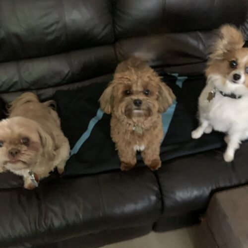 Pet sitter/boarding in my home. Specializing in small dogs. Insured and bonded. Additional services available.
