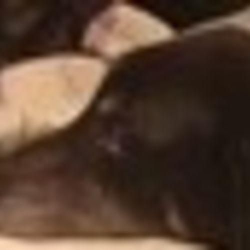 Pet Care Job Steven Patrick Kenna's Profile Picture