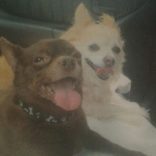 Pet Care Provider Debbie G Gallery Image 1