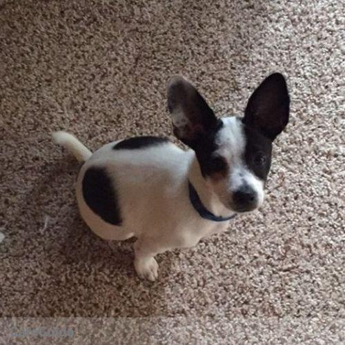 Pet Care Job Samantha E's Profile Picture
