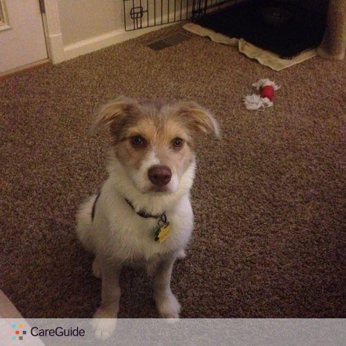 Pet Care Job Chris Palko's Profile Picture