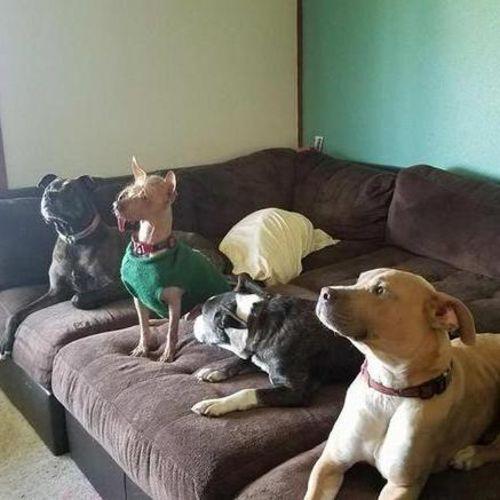 Pet Care Provider Samantha J Gallery Image 2