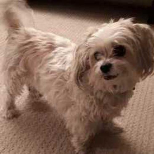 Pet Care Provider Simone K's Profile Picture