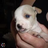 Dog Walker, Pet Sitter in Idyllwild