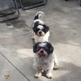 Pet Sitter in South San Francisco