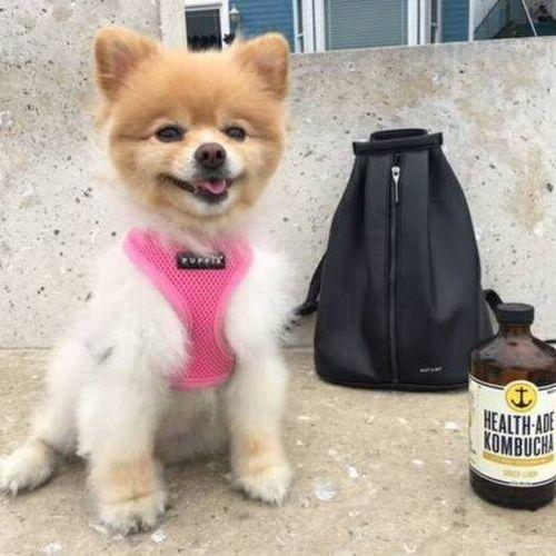 Pet Care Provider Joan Hwang Gallery Image 2