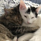 Boarding for 2 Sweet Felines Wanted in Cape Coral, Florida