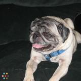 Pet Care Provider in Dennis