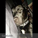 Dog Walker in Sebring