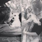 Dog Walker, Pet Sitter in Beausejour