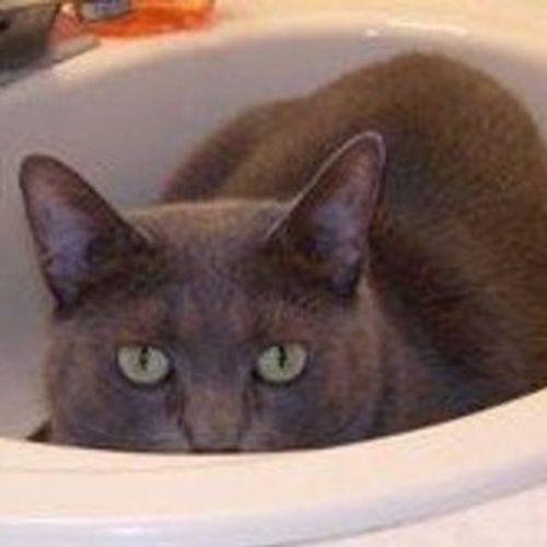 Pet Care Provider James J's Profile Picture