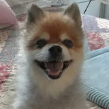 Lovingly caregiver for pets. Very reliable. Experience with oral medication lling to consider pet sitting.