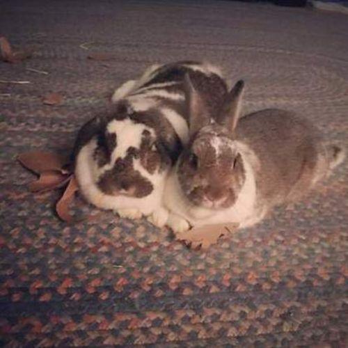 Pet Care Job Lindsay Granger's Profile Picture