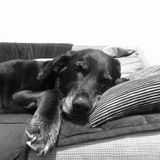 Petsitter Needed For older dog that has separation anxiety