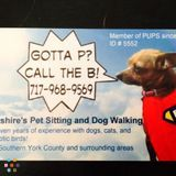 Dog Walker, Pet Sitter in Shrewsbury