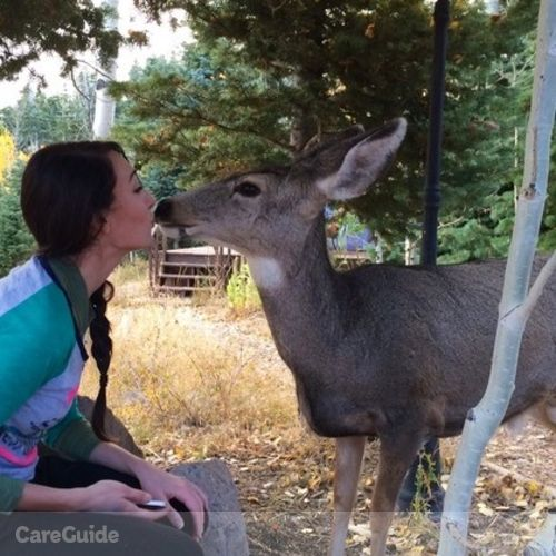 Pet Care Provider Amanda Levine's Profile Picture