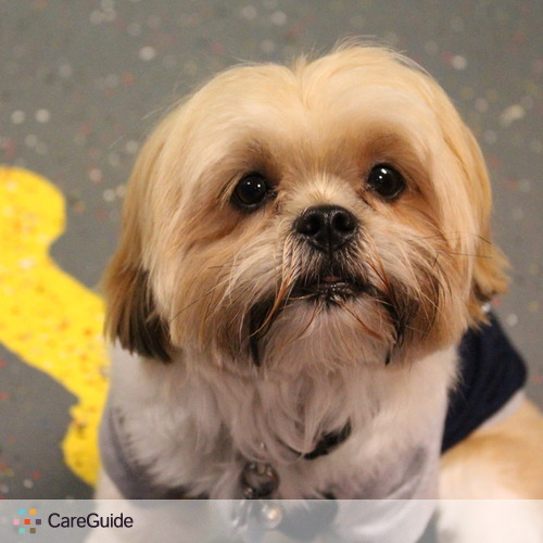 Pet Care Provider Y Bark Alone Doggy Daycare's Profile Picture