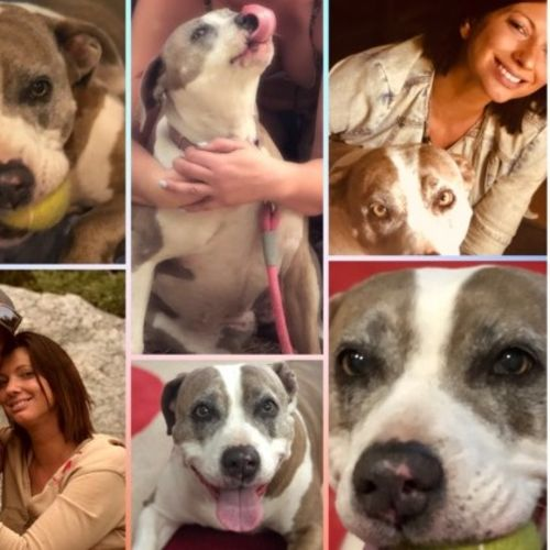 Pet Care Provider  Gallery Image 3
