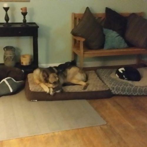 Pet Care Provider Dawn M's Profile Picture