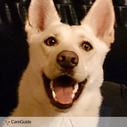Pet Care Provider Angel The White Shepherd's Profile Picture