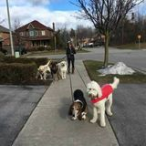Dog Walking/Pet Sitting Available in North Whitby