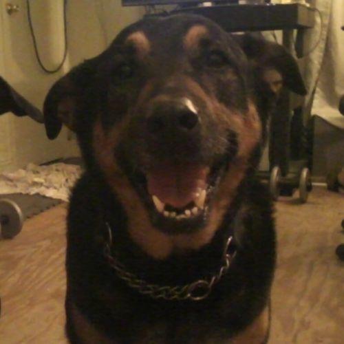 Pet Care Provider Amanda Noguer's Profile Picture