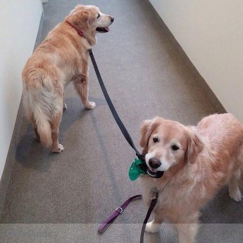 Pet Care Provider Margo Souza's Profile Picture