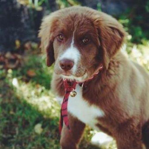 Pet Care Provider Lisa K Gallery Image 3