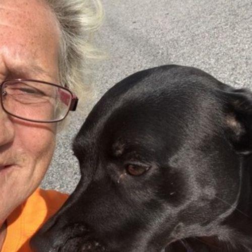 Pet Care Provider Connie D's Profile Picture
