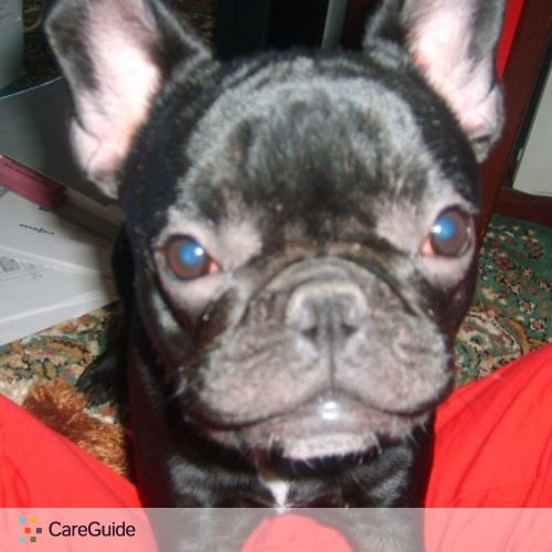 Pet Care Provider Blayne V's Profile Picture
